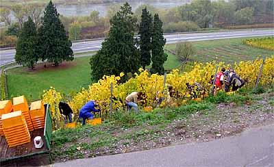 2008-10-23-grunewald.jpg