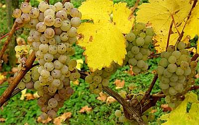 2008-10-27-riesling.jpg