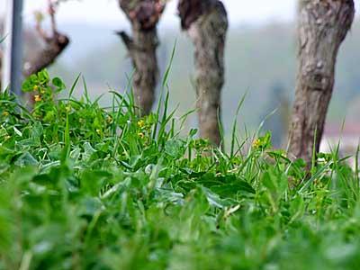 2009-04-16-bergerac.jpg