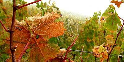 2009-10-19-spinnennetz.jpg