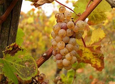 2009-10-27-riesling2.jpg
