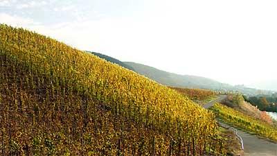 2009-10-30-herbstfarbung1.jpg