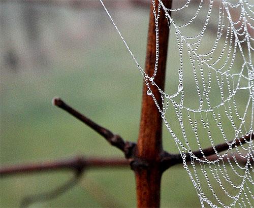 2014-02-24 Spinnennetz