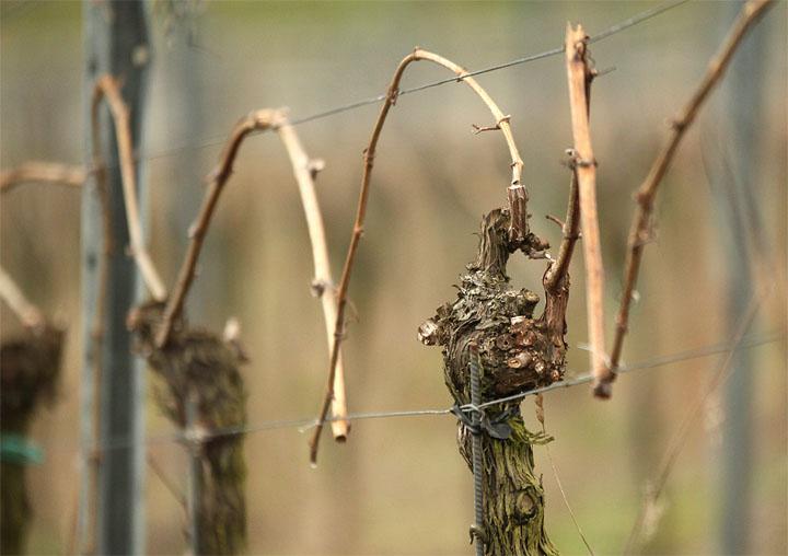 20015-03-31 Fruchtruten