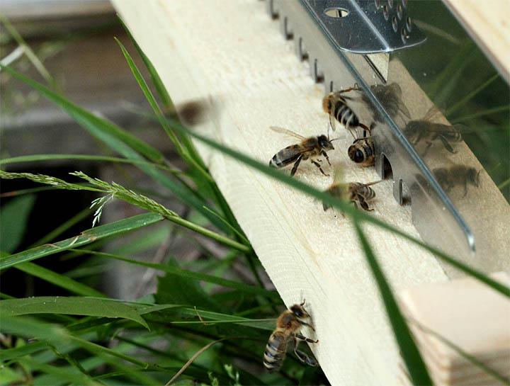 2015-05-04 Bienen