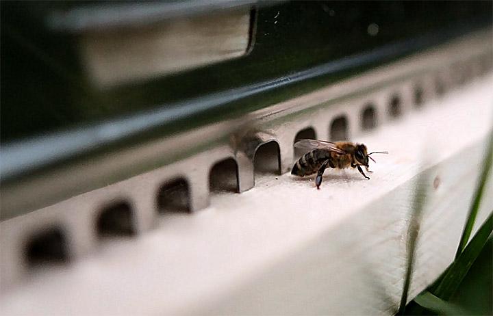 2015-06-03 Bienen