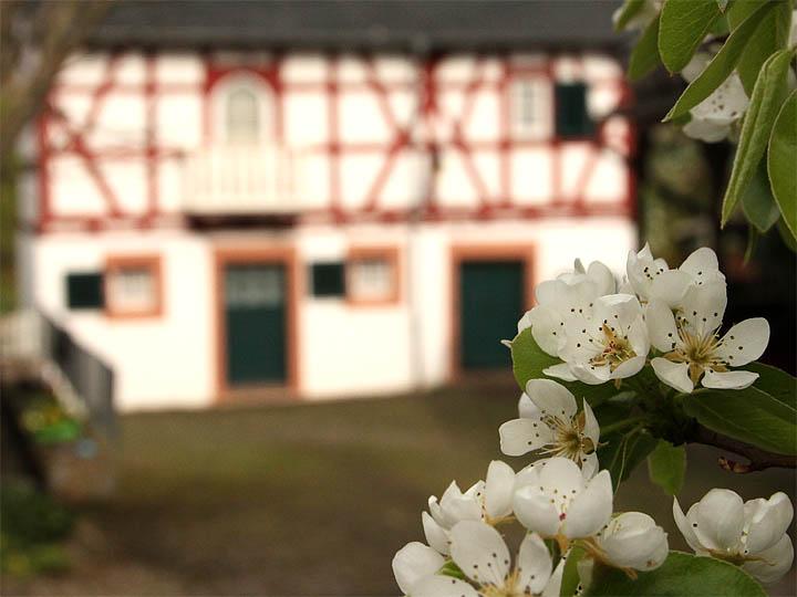 2016-04-23 Obstblüte Hof